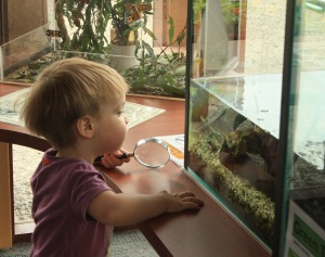Sebastian loved examining the fish. He talked about little yellow fish for days.